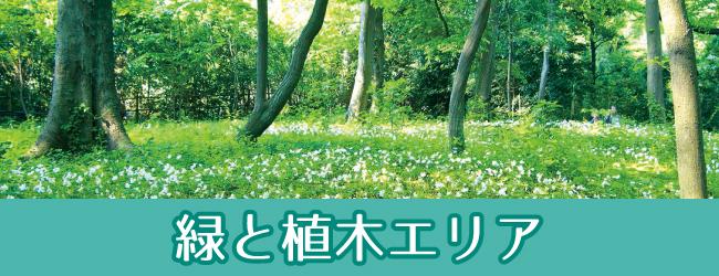 かわぐち体感観光 緑と植木エリア